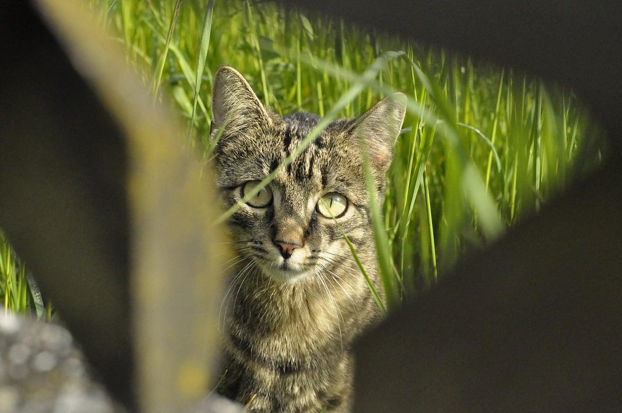Comment faut-il procéder pour habituer son chat à la laisse ?