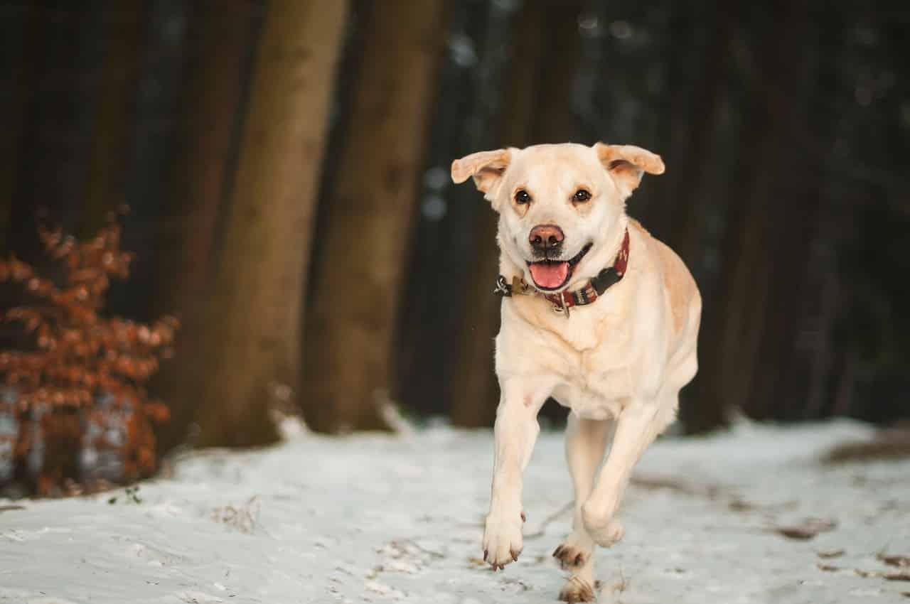 Comment empêcher son chien de s'échapper sans mettre de clôture ?