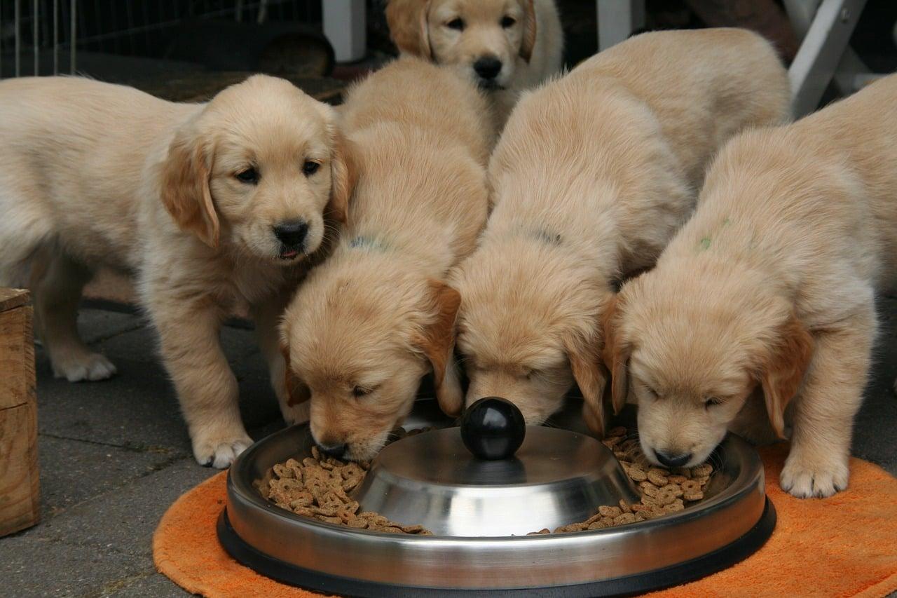 Pourquoi les vétérinaires promeuvent autant Royal Canin ?