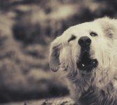 Comment calmer un chien qui aboie parce qu'il a peur ?