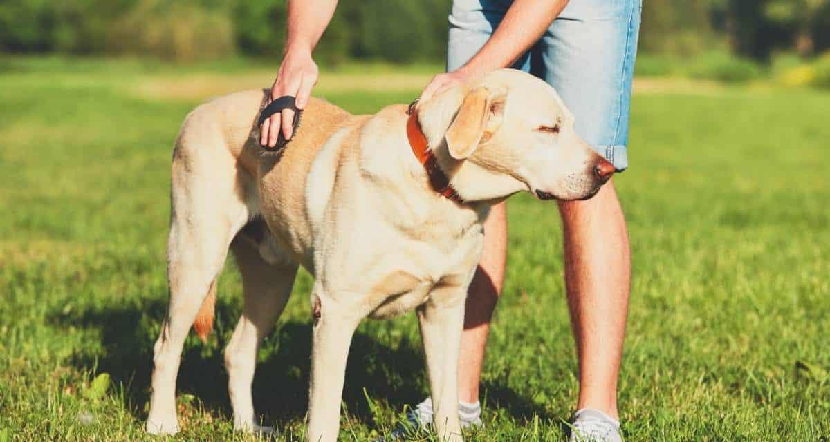 Démêler le pelage d'un chien c'est facile ! Les Conseils