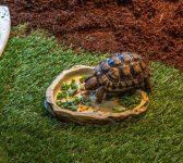 Comment aménager un bon enclos pour sa tortue de terre ?