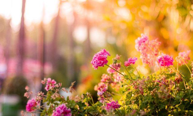 Printemps ou Été : Optez pour un coffre de jardin