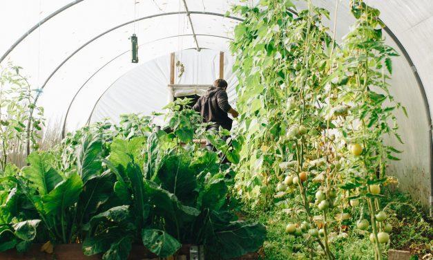 Est-il mieux de Cultiver dans une Serre en Verre ou en Polycarbonate ?
